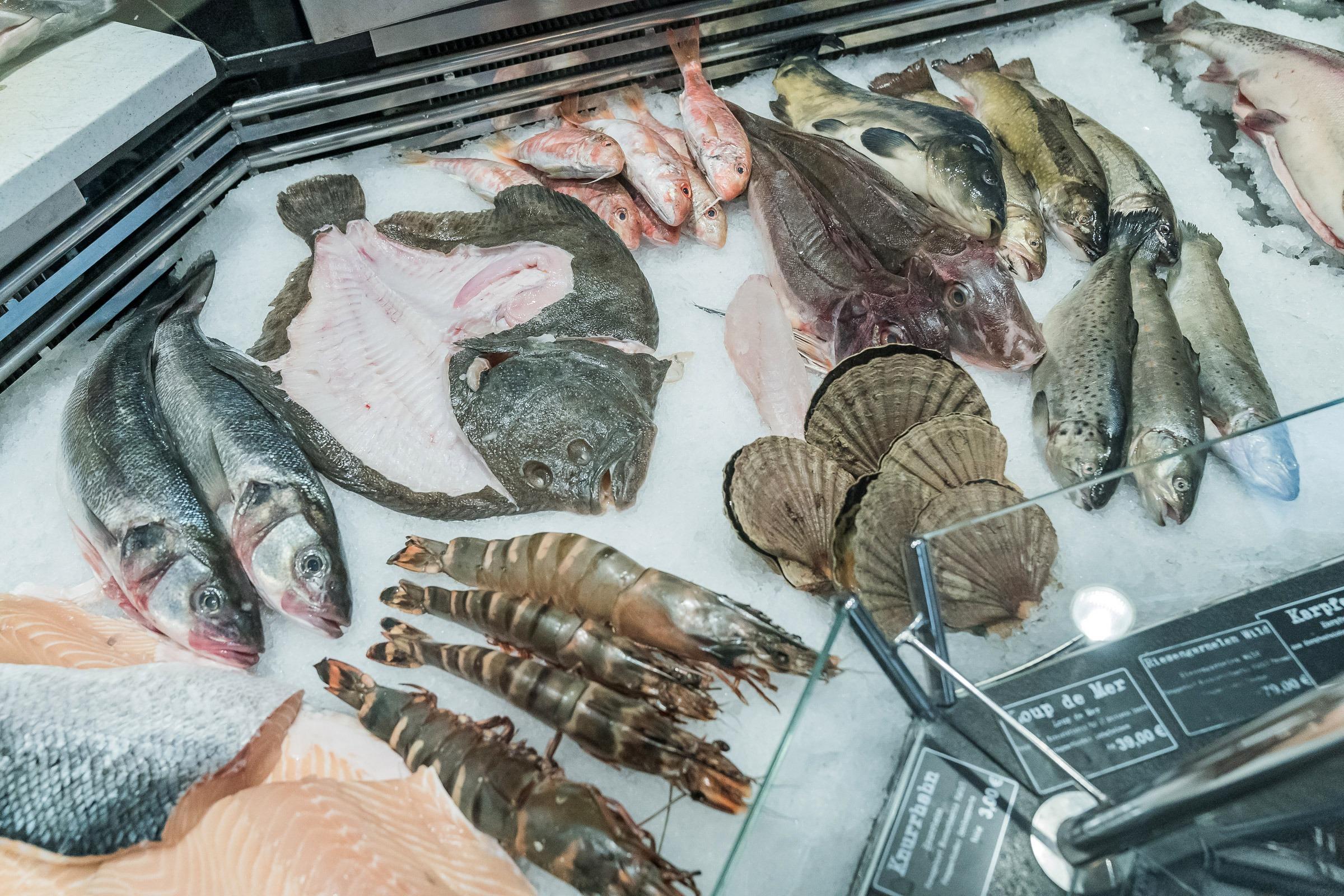 Fisch Baier22